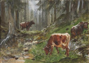 Kühe im Gebirgswald