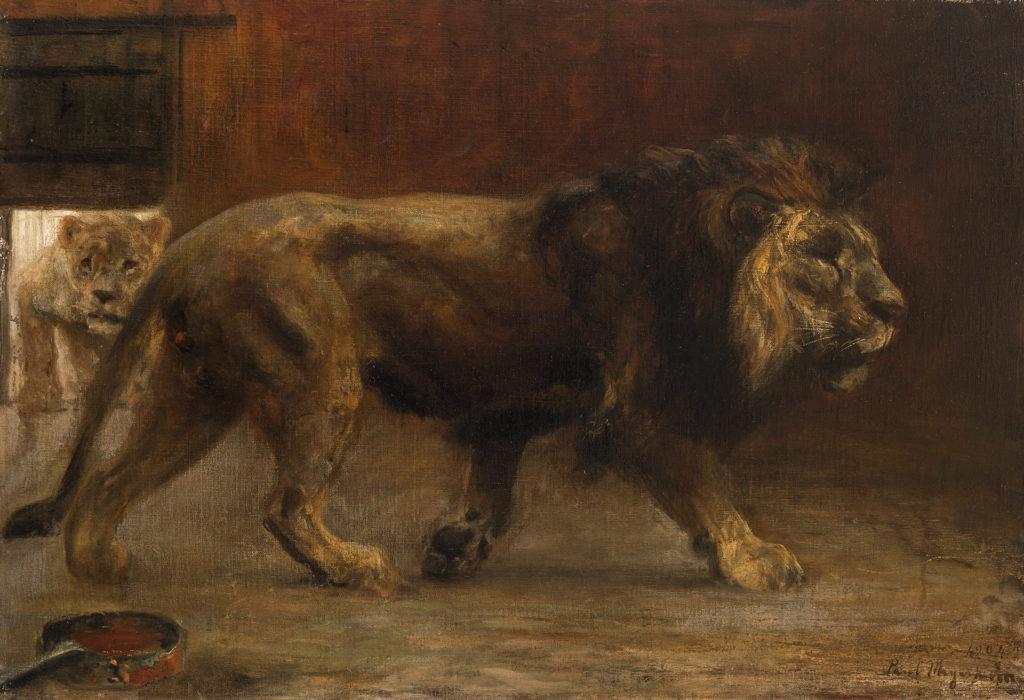 Löwenpaar im Käfig